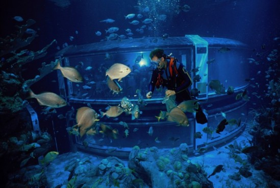A fish-eye view in The Seas with Nemo and Friends, at Epcot. Photo: Disney